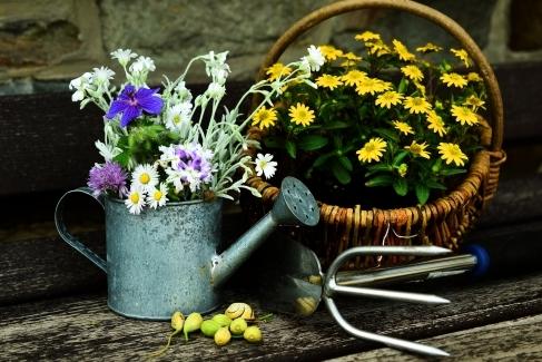 Casă și grădină
