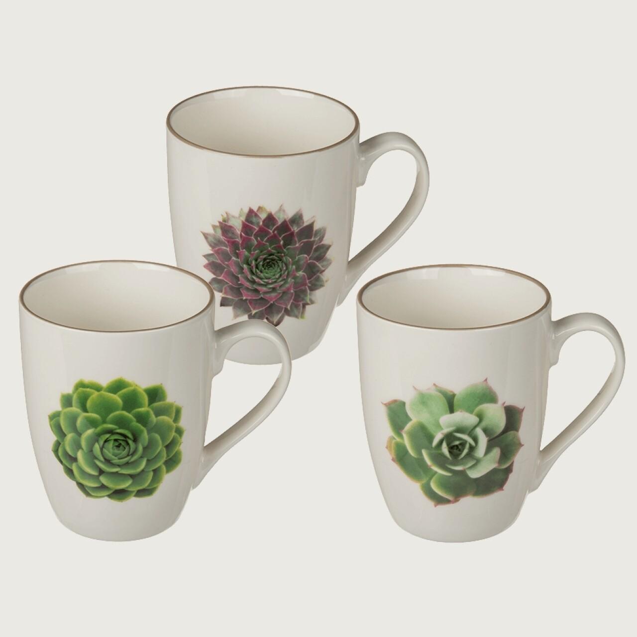 Set 3 cani Succulents