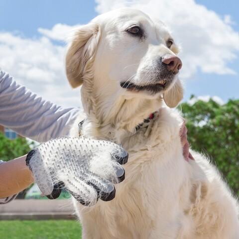 Manusa pentru ingrijirea animalelor de companie InnovaGoods Brush & Massage, silicon